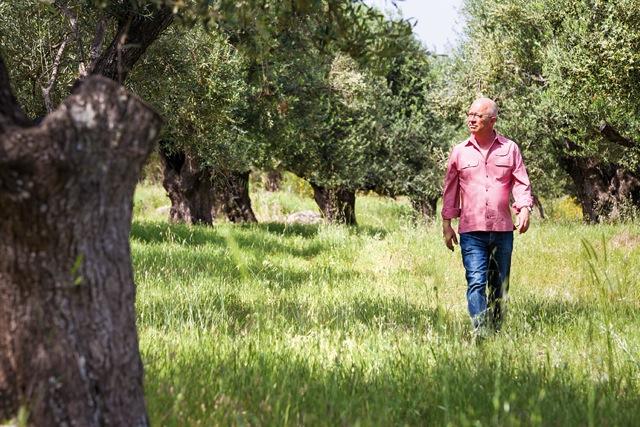 Oliven Plantage
